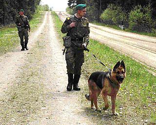 В Беларуси пограничники обнаружили в лесу почти 2 тонны мяса